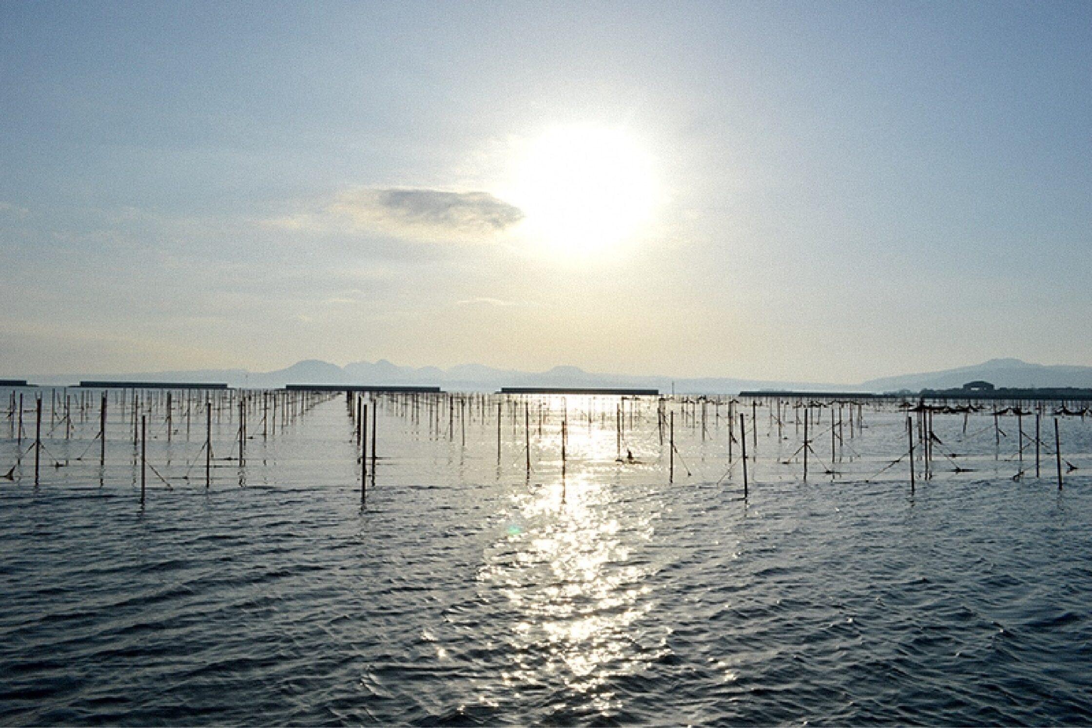 海苔養殖の画像